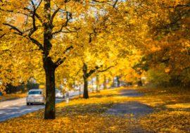 Saisonale Veränderungen – Sicher durch alle Jahreszeiten