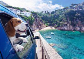 Ab in die Sonne: Beliebte Urlaubsziele mit Hund & Auto