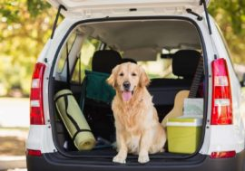 Kofferraumaufteilung: So bringst du Hund & Gepäck unter