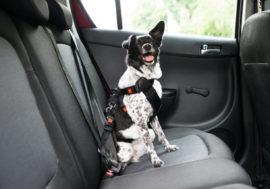 Pfiffi & Co: Welches Autozubehör für Hunde brauche ich wirklich?